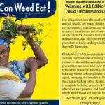 <b>Audible Weed Walk – ep.24 Talking, Dreaming, Waiting to eat – wild edible greens</b>