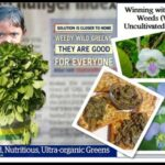 <b>Audible Weed Walk – ep.25 Foraging as a child</b>