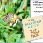 <b>Audible Weed Walk – ep.28 Do Bees (and other pollinators) need weeds?</b>