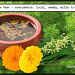 <b>Audible Weed Walk – ep.37 New Year – everywhere: local, weedy, wilds to eat</b>