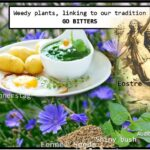<b>Audible Weed Walk – ep.36 Weedy plants, linking to our tradition – Go Bitters</b>