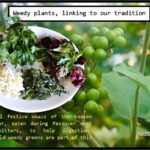 <b>Audible Weed Walk – ep.35 Weedy plants, linking to our tradition</b>