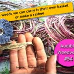 <b>Audible Weed Walk – ep.54 Edible weeds we can carry in their own basket or make a rakhee</b>