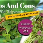 <b>Audible Weed Walk – ep.55 WHY to weed and NOT to weed</b>