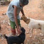 <b>Animal Care</b>