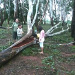 After the cyclone