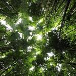 <b>La Jungle, Les Voyages, Mère</b>