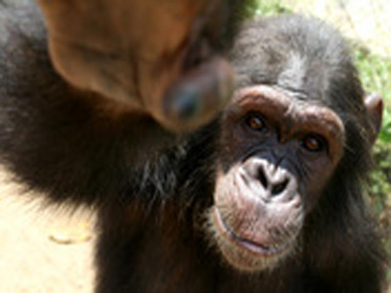 Photographer:   Monkey