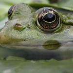 <b>Froggy news</b>