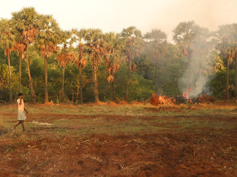 Photographer: | Tree cutting near certitude