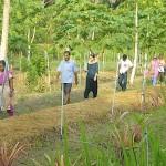 Walk through the papaya garden