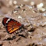 <b>Comment passer de la bouillie au papillon</b>