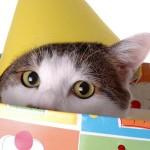 <b>Felicitaciones del mundo felino</b>