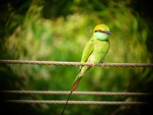 Photographer:Kireet / Andrea | Bee-eater