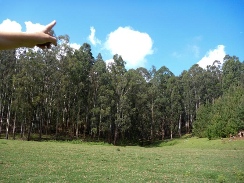 Photographer:Satyamayi (8 ans   Un doigt dans les nuages
