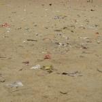 <b>L`Avenir and Plastic</b>