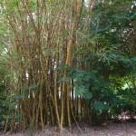 <b>Bamboo energy</b>