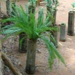 <b>The Wonders of Bamboo</b>