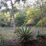 Auroville forest