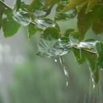 <b>Blessed rain</b>