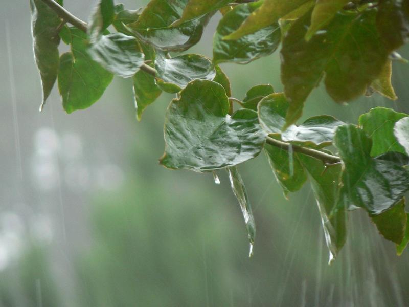 Photographer:World web | Smell of rain