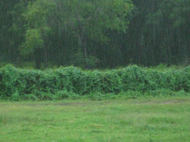 Photographer:Mari | rain