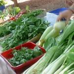 Aruoville Market