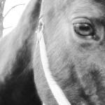 <b>Just a Horse</b>