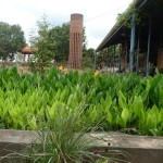 The Biological Waste Treatment Garden uses Canna flowers. Its treatment makes water suitable for gardening.