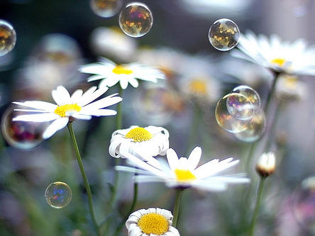 Photographer:web | Bubbles in Spring