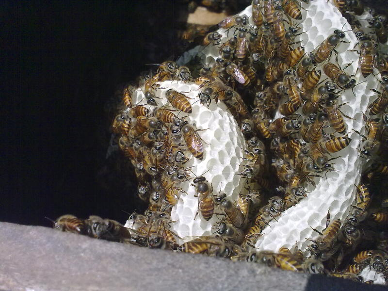 Photographer:Gino | The inner chamber of a bee hive!