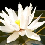 <b>Remembering Bhavana</b>
