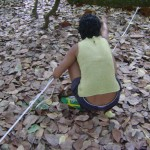 Measurement of the land inside the cashew trees
