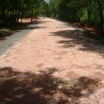 Crown Road between Arka and Surrender