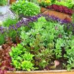 <b>Lawns or Vegetable Gardens?</b>