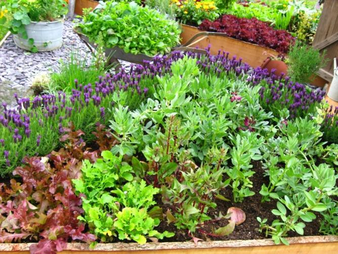 Photographer:Image from http://3.bp.blogspot.com | Vegetable garden