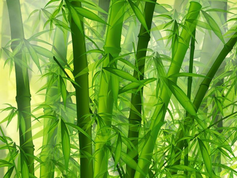 Photographer:wallpaper-s.org | Bamboo