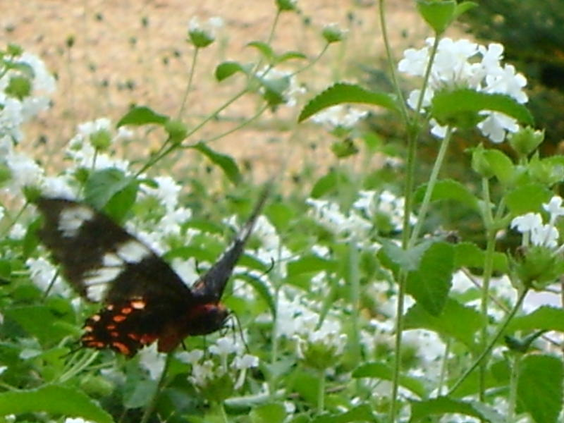 Photographer:Miriam | After This Morning Rain - all the butterflies came out