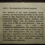 Lucy - the beginning of the humankind