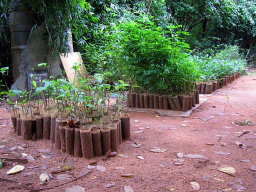 Photographer:Max | Auroville Botanical Garden