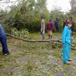 Thousands of trees felt on the roads and electrical cables