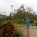 Trees were uprooted by a 140 kpm/h wind
