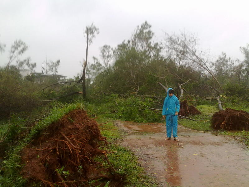 Photographer:Andrea   Trees were uprooted by a 140 kpm/h wind