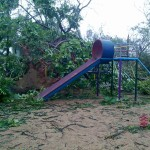 A big trees collapsed on the playground in Certitude