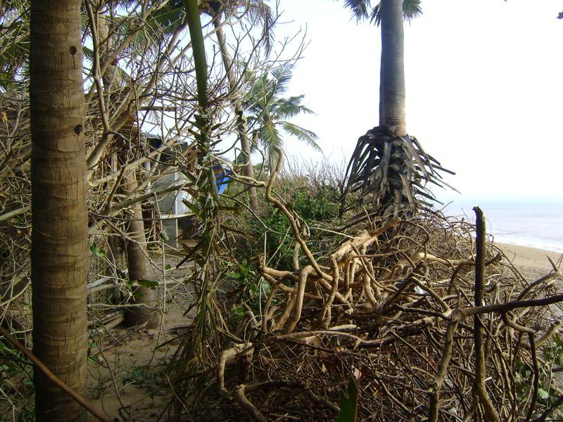 Photographer:miriam | Uprooted Buganvilla