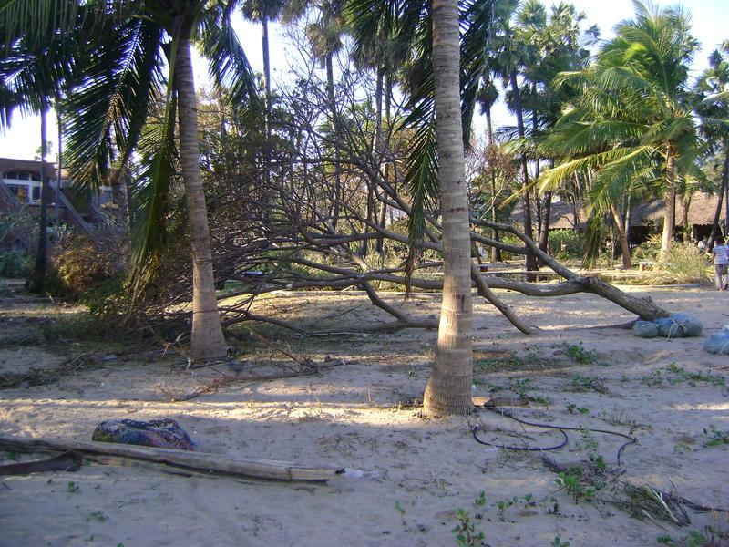 Photographer:miriam | Fallen Trees