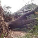 Big trees were uprooted by winds blowing at 140 km/h