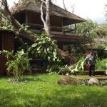 Uma watching a tree fallen in Upasana