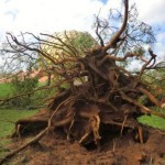 In the Matrimandir gardens some trees felt but the architectectural structures are safe.