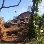 tree to be taken down